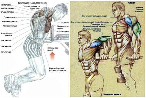 проработка мускулов