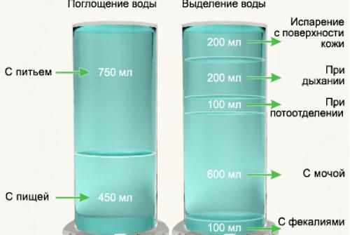 Поглощение и выделение жидкости