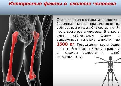 интересный факт о костях