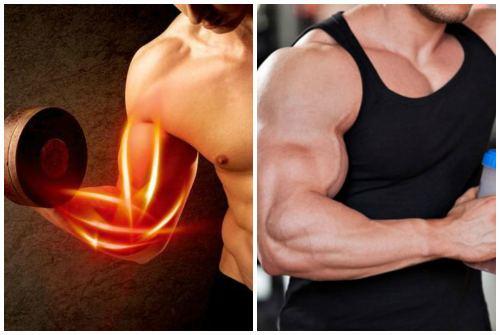 эффектные мышцы