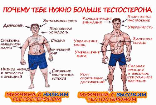 значение тестостерона