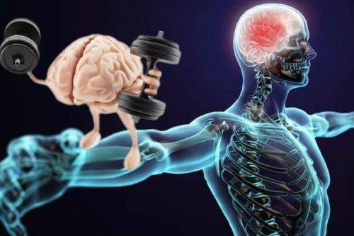 Взаимодействие мозга и мускулатуры