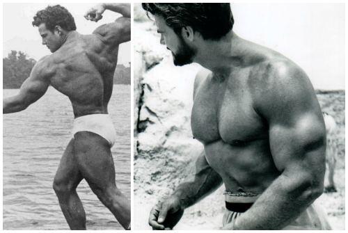 вид мышц