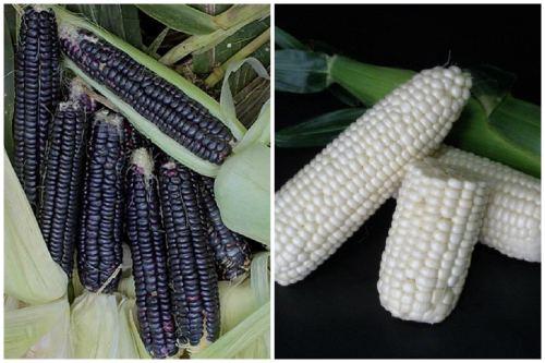 Восковая кукуруза