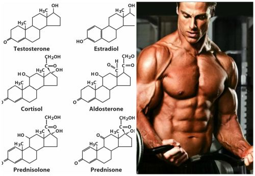 Стероидные гормоны